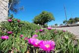 Casa con piscina Pescoluse - Riferimento: 1216